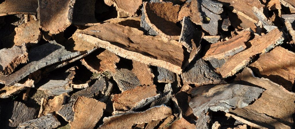 cork-oak