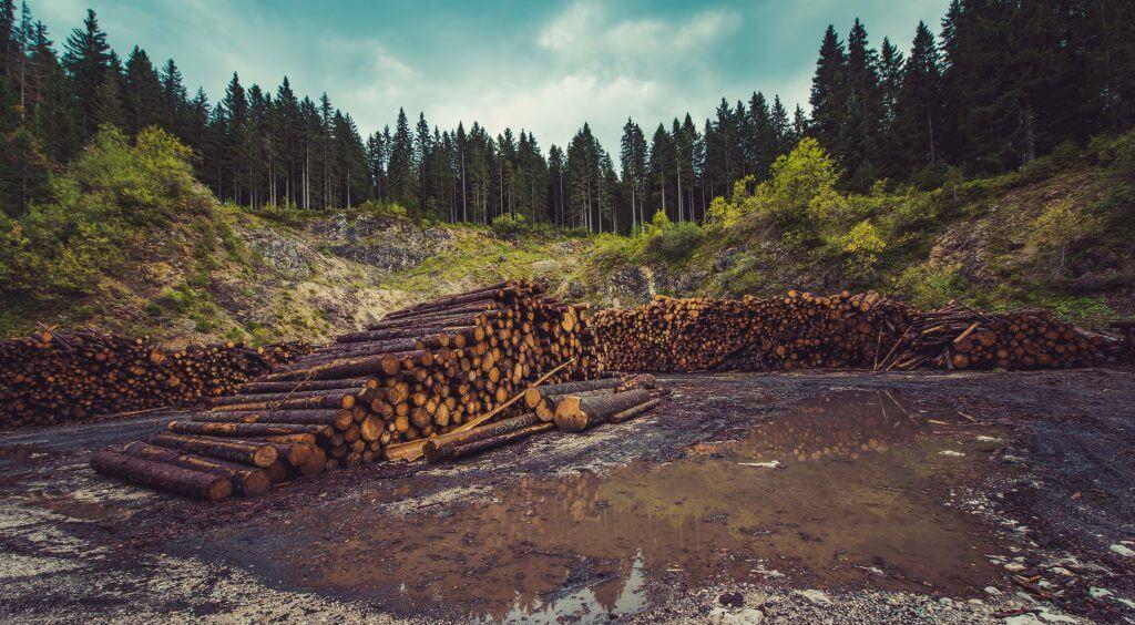 deforestation-limited-ressources