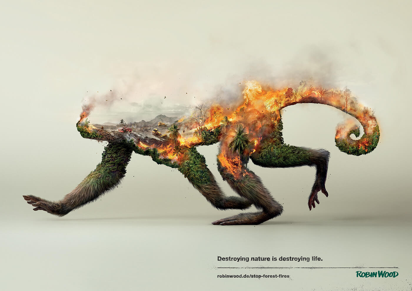 deforestation-kills-wildlife