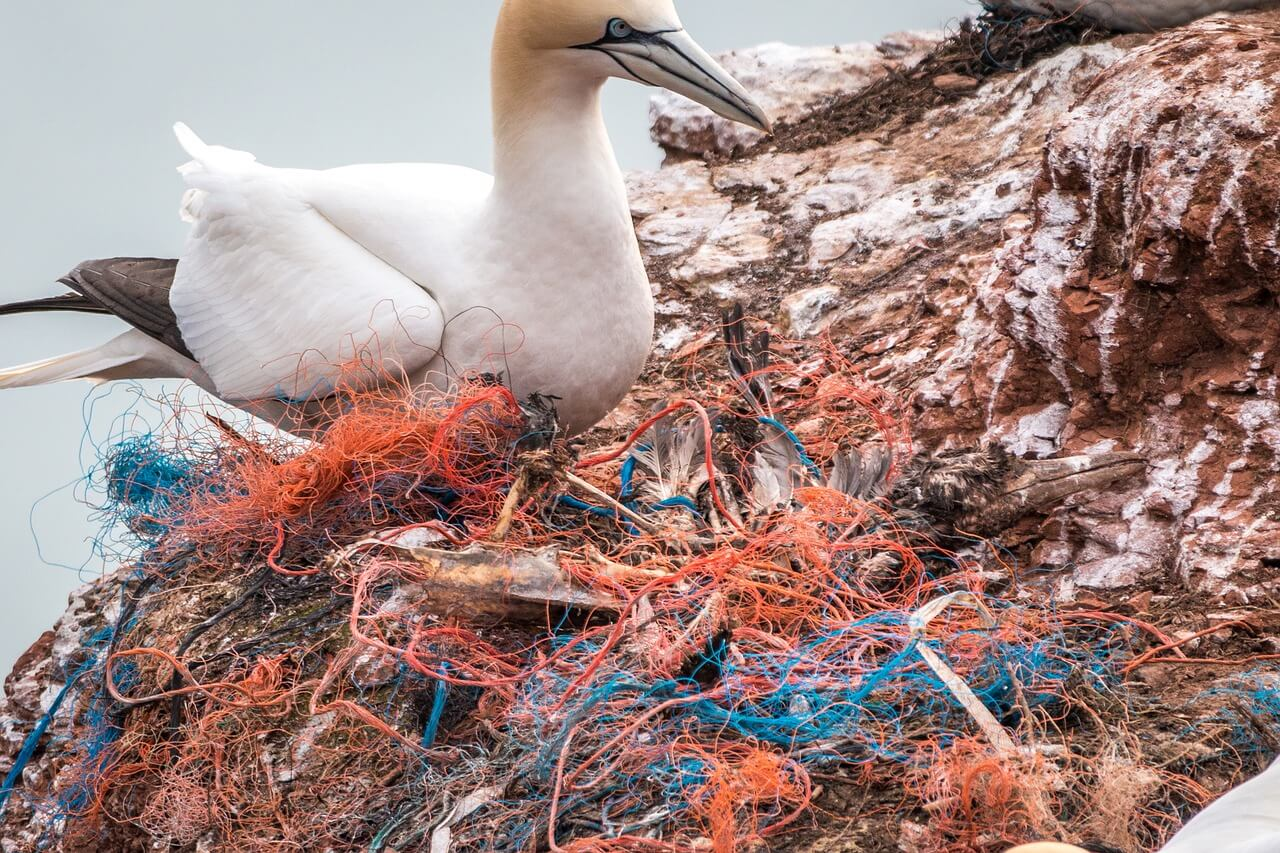 fishing-nets-waste