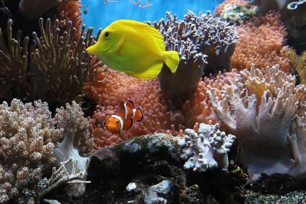 reef-fish