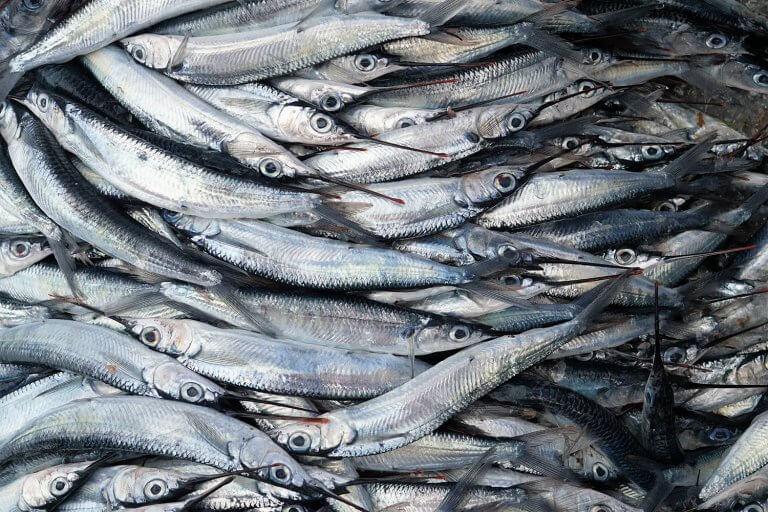 fish-waste