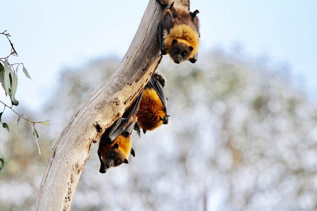 cute-bats